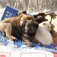найдены щенки 5 шт