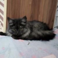 Найден котенок