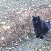 Кота выкинули на улицу! Нужна передержка или дом