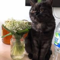 Пропал кот, окрас черно-серый