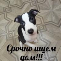 Найден щенок!