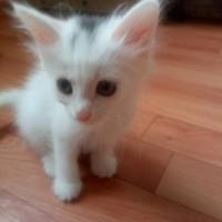 В добрые руки котята цвет белый