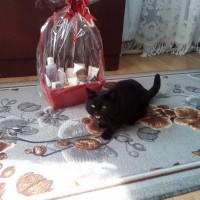 Внимание! Пропал кот