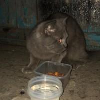 Был найден кот цвет черный