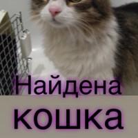 Найдена кошка, окрас рыже-серый, белая мордочка и грудка
