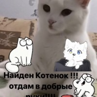 В добрые руки, котенок, окрас белый