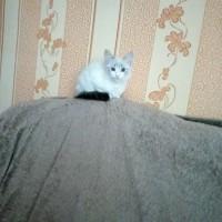 Пропал кот, окрас белый