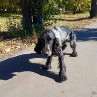 #Пенза #Потеряшкакто-нибудь видел собаку?
