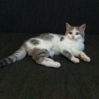 найден котенок(девочка)