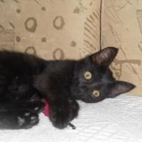 Бывший бездомыш котенок ищет любящего хозяина!