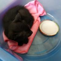 В добрые руки котенок цвет черный