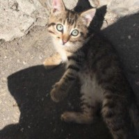 Помогите найти котенка