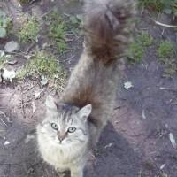 Найдены кошки