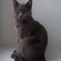 В июле, в жару была найдена кошка в переноске с ней был 2-х недельный котенок.