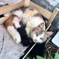 В добрые руки, кошка и котята, окрас черно-белый