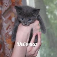 В добрые руки, кошка и котята, окрас смешанный